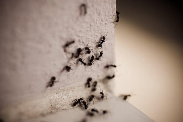 в квартире муравьишки